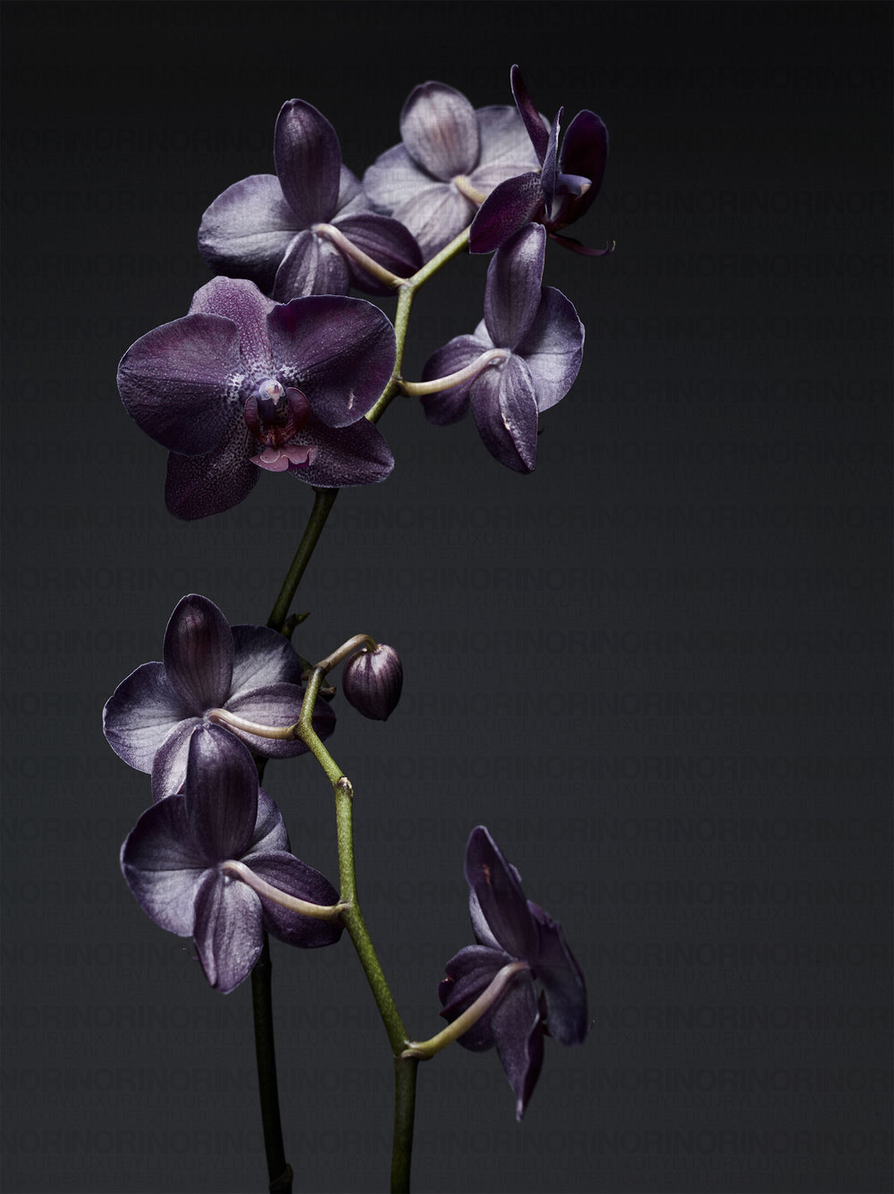 022218_flower182445.jpg