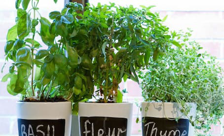 potted herbs.jpg