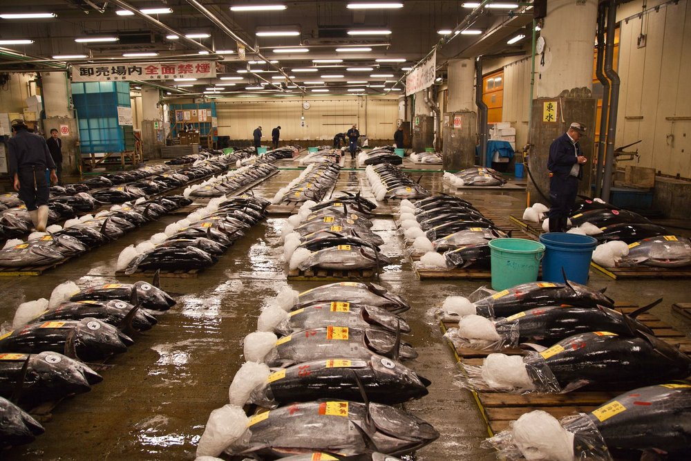 The daily tuna auction is the world's largest.
