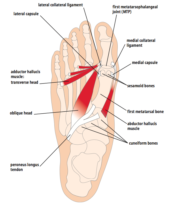 Diagram Of Joints In Toes - All Kind Of Wiring Diagrams •