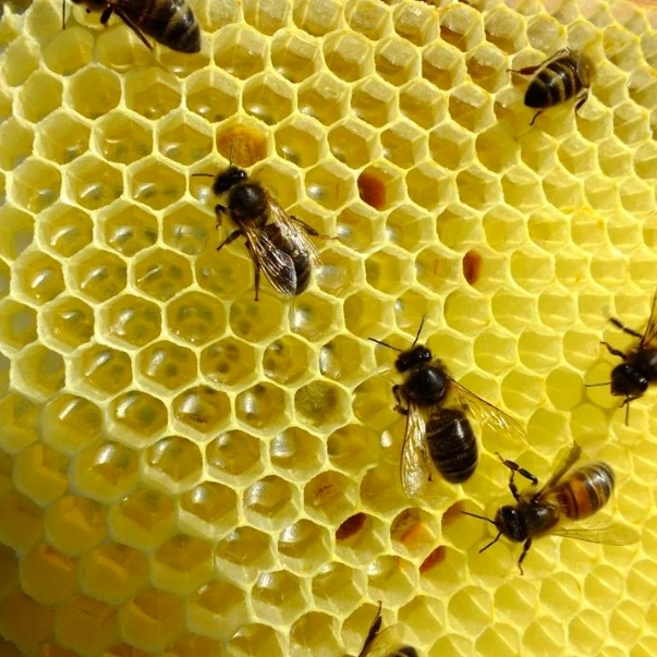 01 honeycomb.jpg