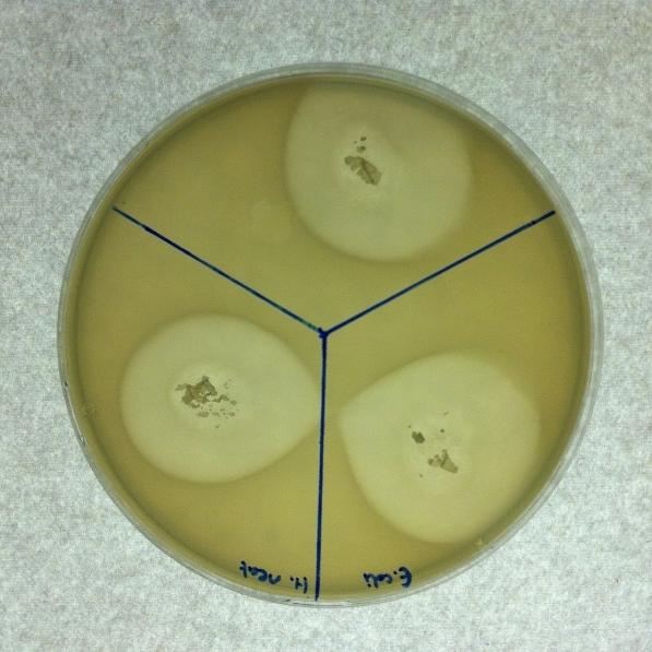 02 antibacterial.jpg