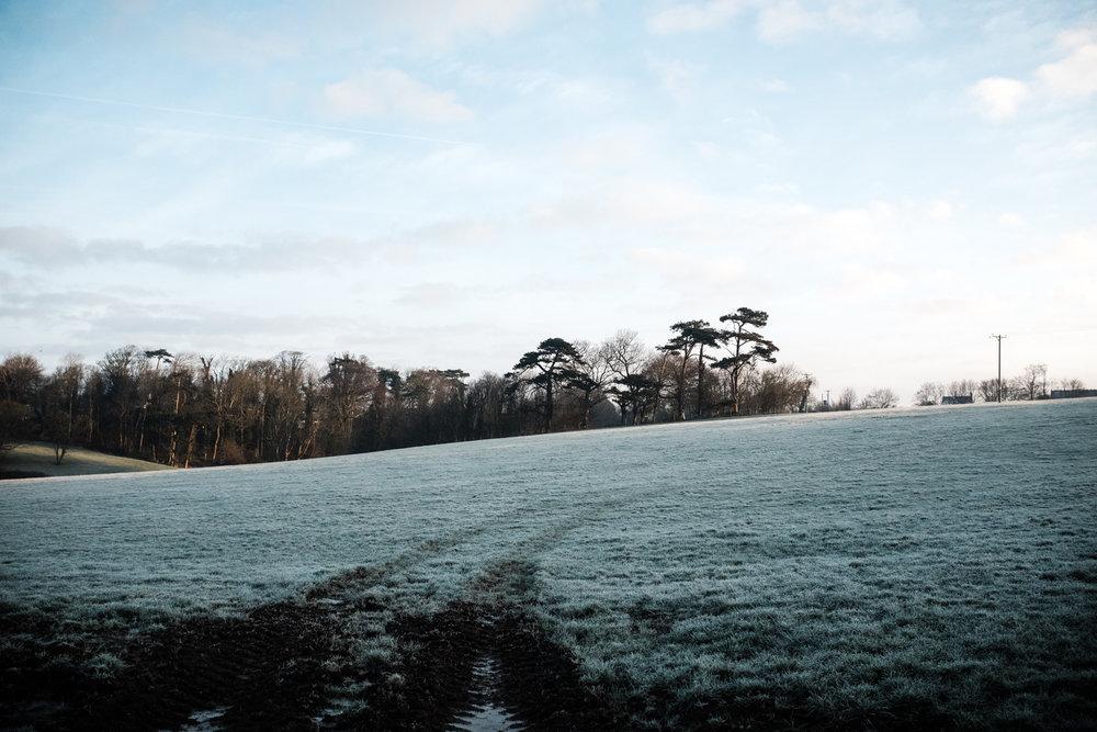 Alex-Sedgmond-Photography-Cardiff-Wales-Forbesfield-Florist-Cardiff-Rosedew-Farm-Flower-School-FFS.JPG