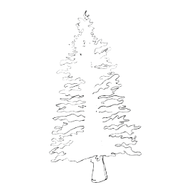 White Spruce Oil (Picea glauca):  Process: Steam-distilled from organic White Spruce needles, Canada Qualities: Uplifting, breath-enhancing Found In:  Sweet Presence Mist