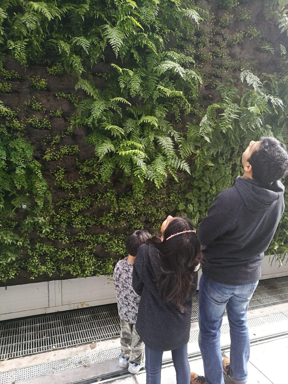 Living wall at SF MOMA
