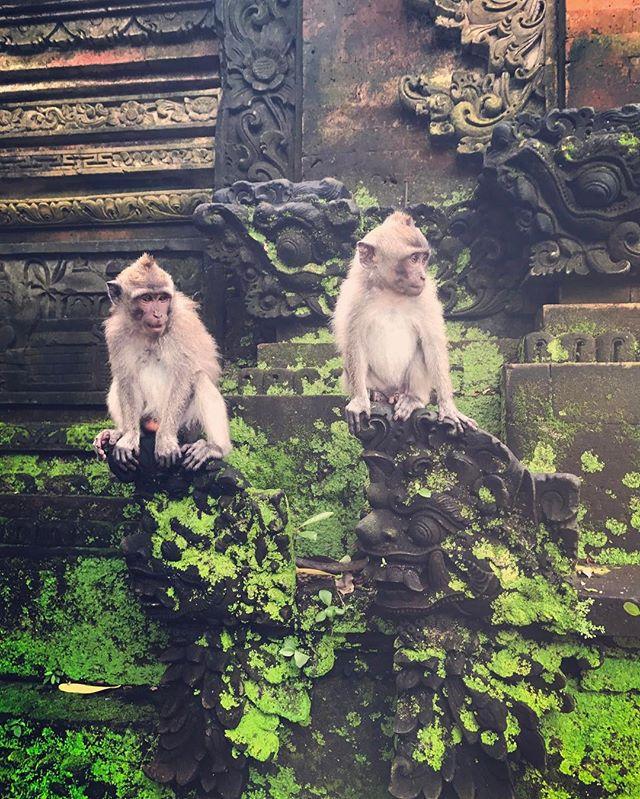 Wednesday's are for monkeyin' around #bali #explore #travel #wednesday