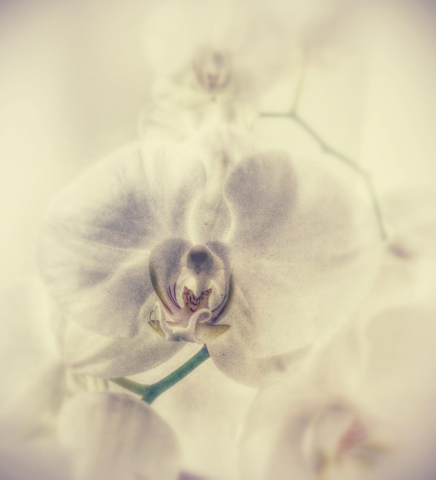 photo (3) (1)