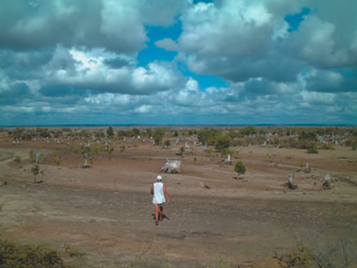 Kilometers of clear-cut, old-forest mangrove stands. Image credit: Author.