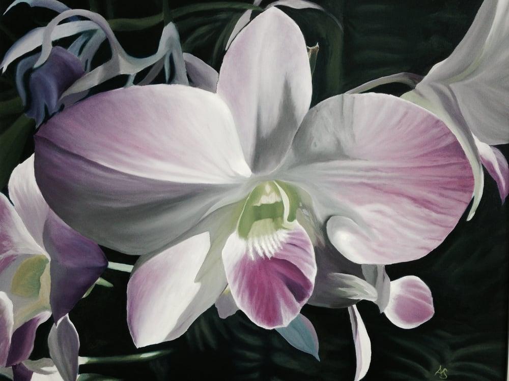 Purpil Orchid