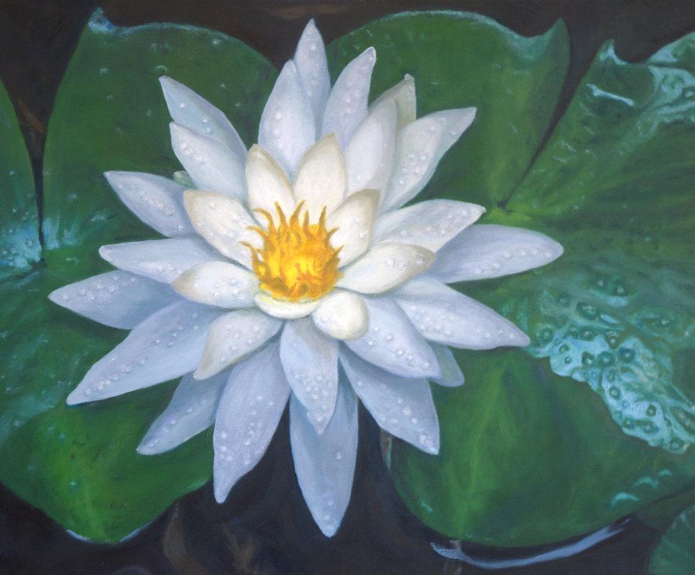 Waterlily Bloom