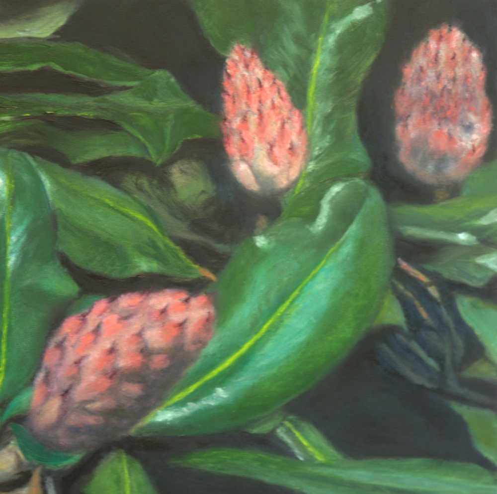 Magnolia Seedpods