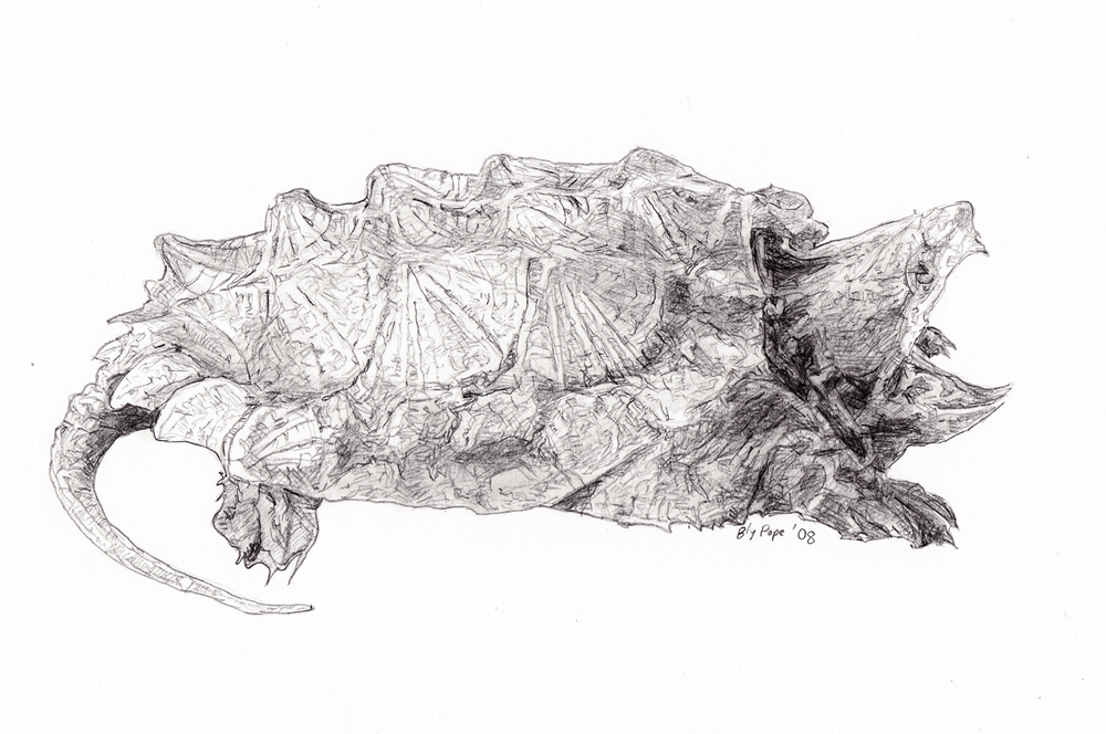 "Snapping Turtle, pencil, 4"" x 5"" - by Bly Pope"