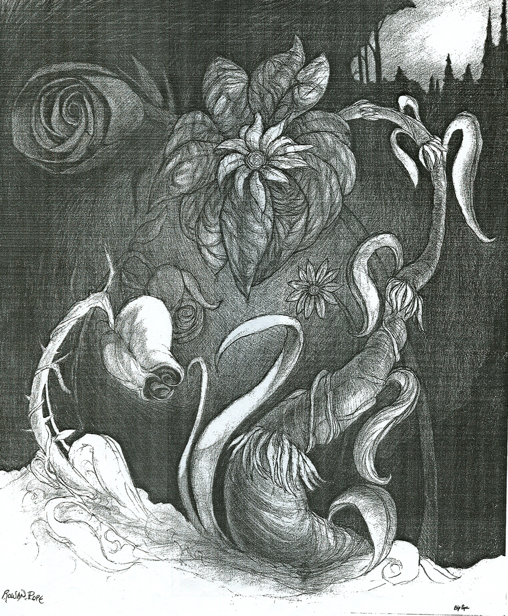 "Dark Flower, pencil, 14"" x 11"" - Bly and Rowan Pope"