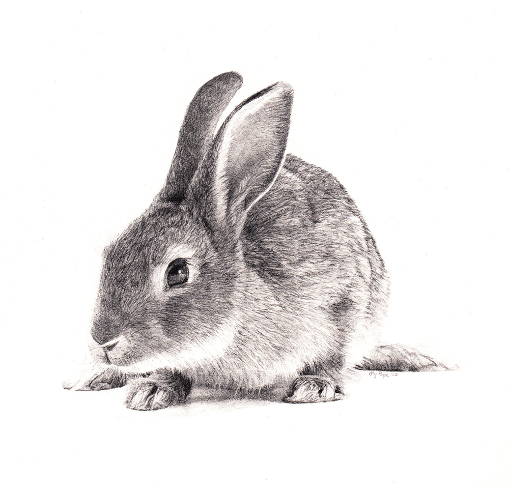 "Rabbit, pencil, 4"" x 4"" - by Bly Pope"
