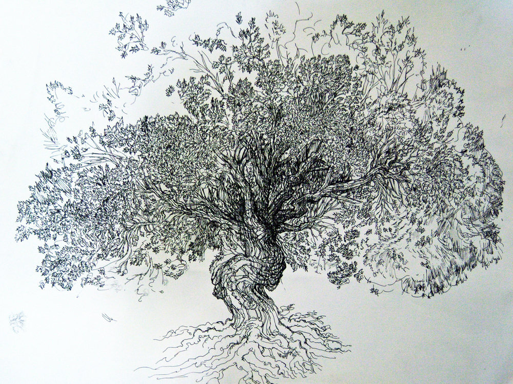 "Tree, pen, 13"" x 18"" - by Rowan Pope"