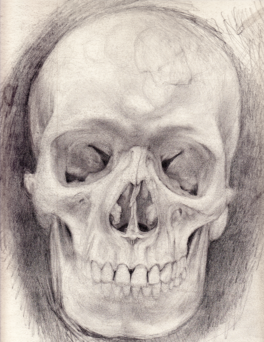 "Skull, pencil, 14"" x 10"" - by Rowan Pope"