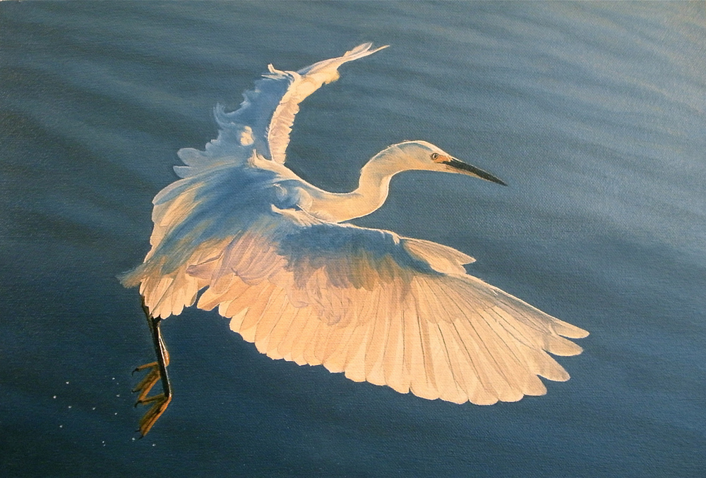 "Snowy Egret Over Waves, oil, 11"" x 17"" - by Bly Pope"