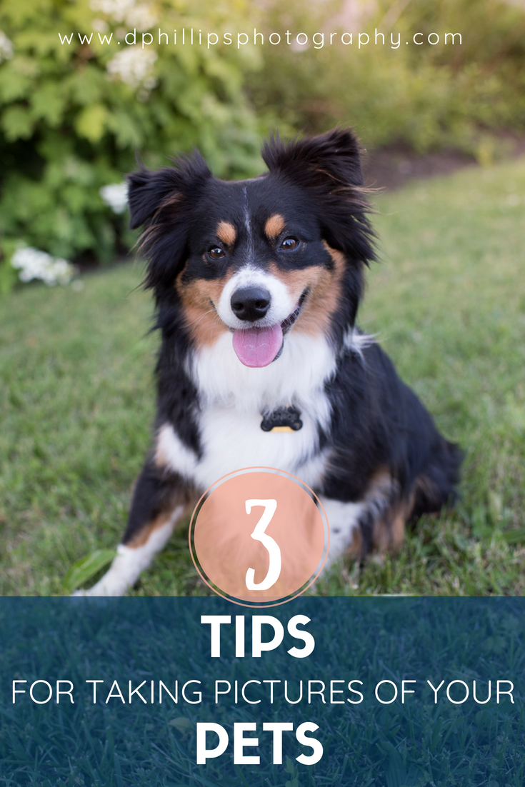 3 Tips for Taking Pictures of Your Pet - DPhillipsPhotography.com
