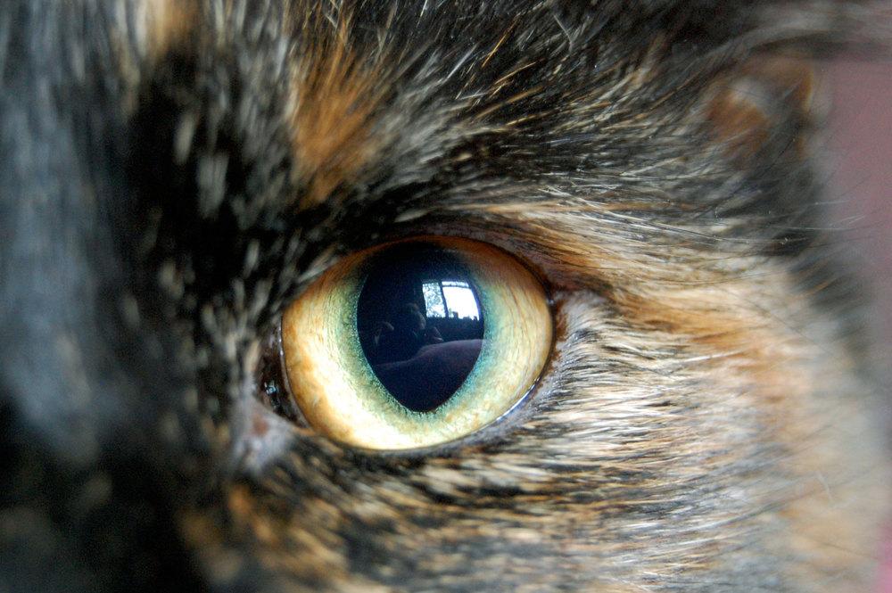m-cat.JPG