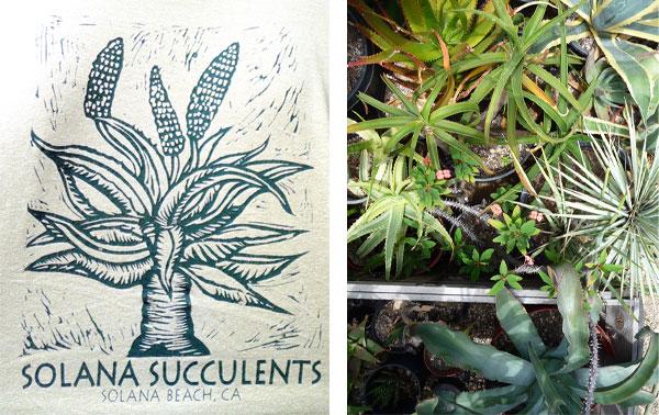 solana-succulents