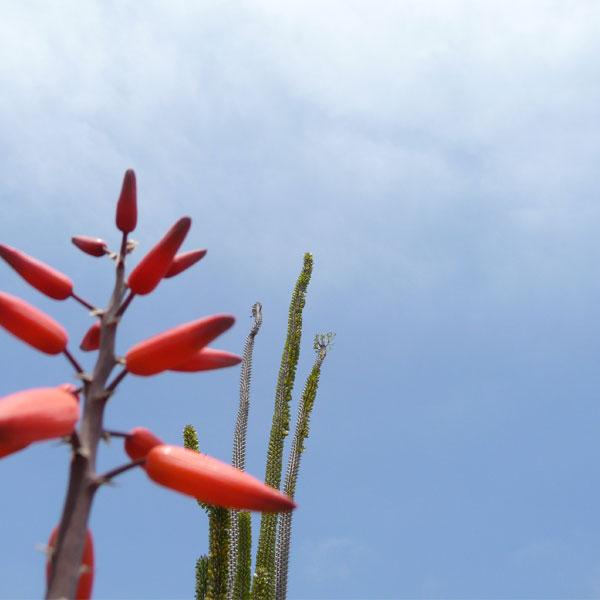 solana-succulents-02