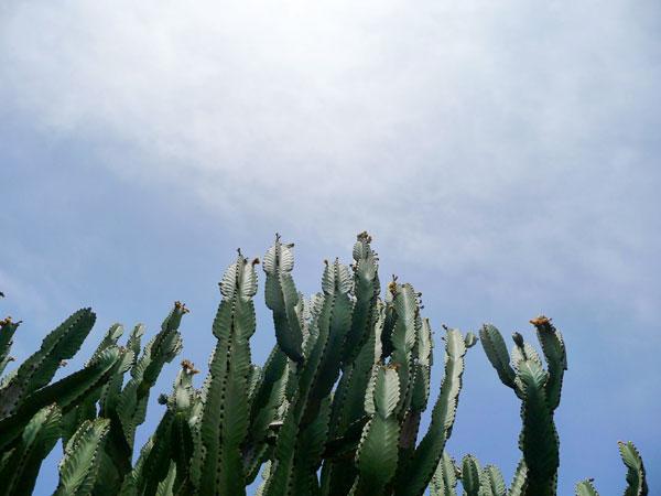 solana-succulents-04