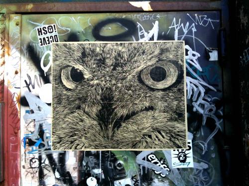 nyc owl