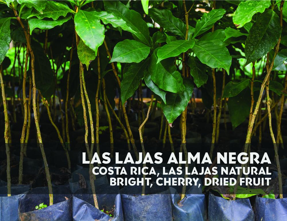Alma Negra-01.jpg
