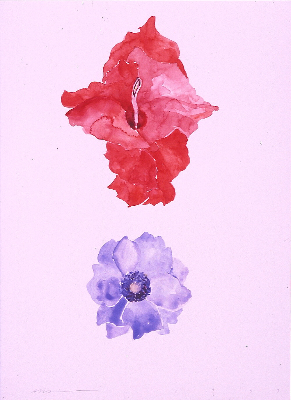 God disguised as Gladiola and Anemonie