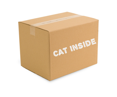 Shrodinger-cat-box
