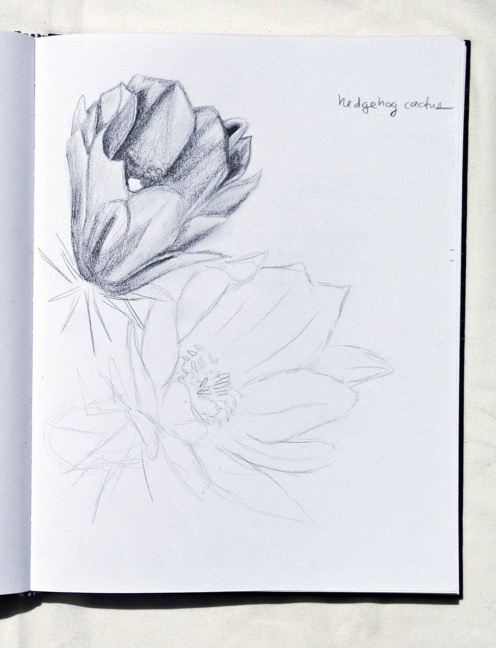 Cactus Blossom Study  Circa 2017