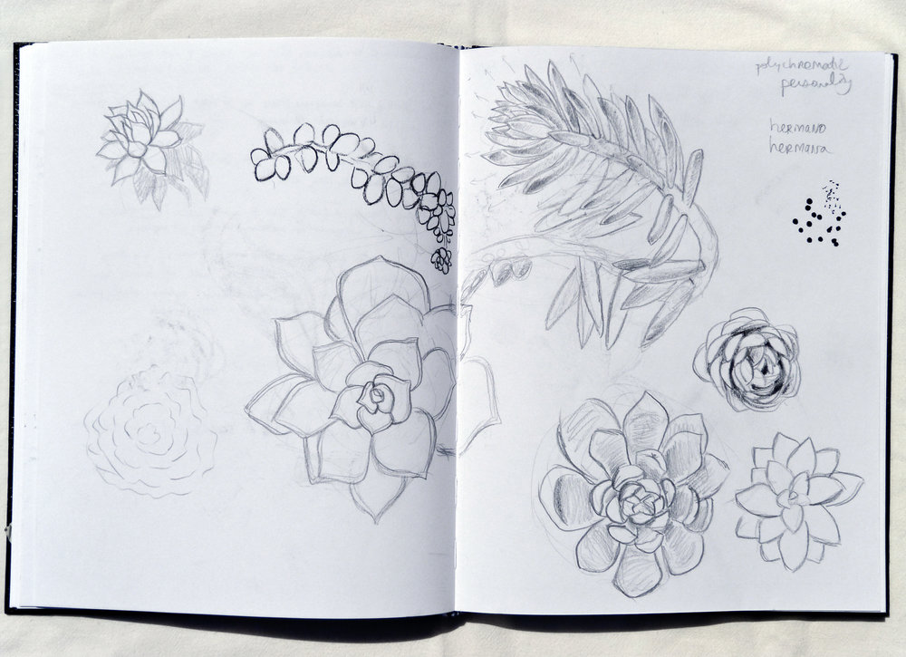 Mini Succulent Studies  Circa 2017