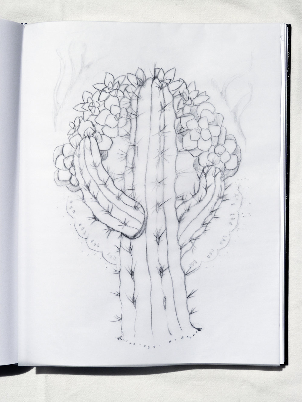 Cactus Sketch for Painting  Circa 2017
