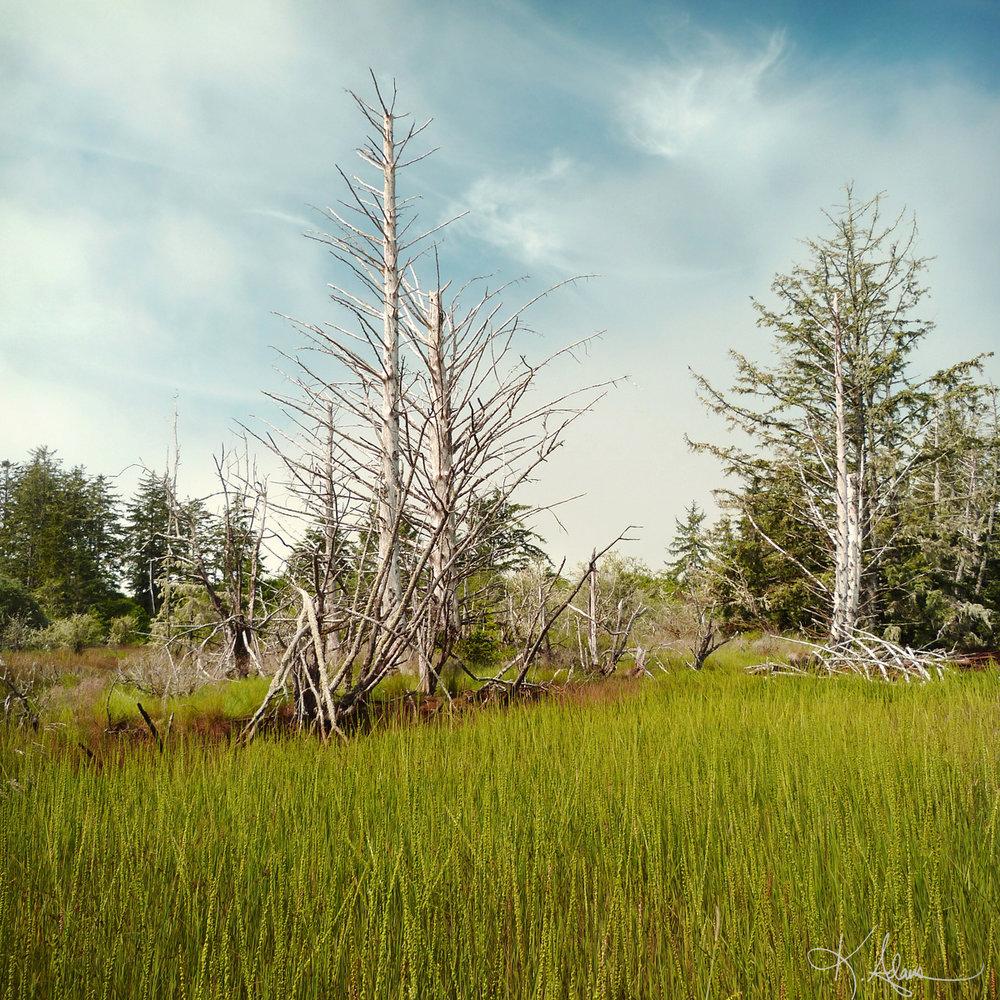Bay City Wetlands