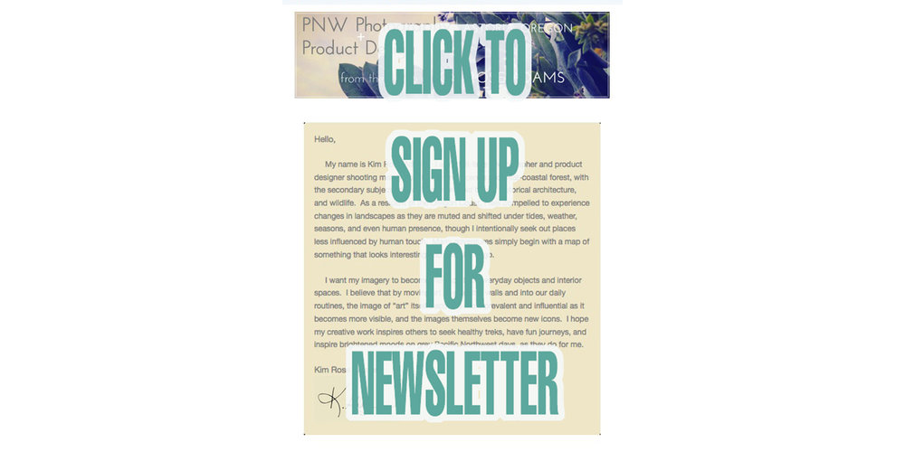 wholesale newsletter web copy.jpg