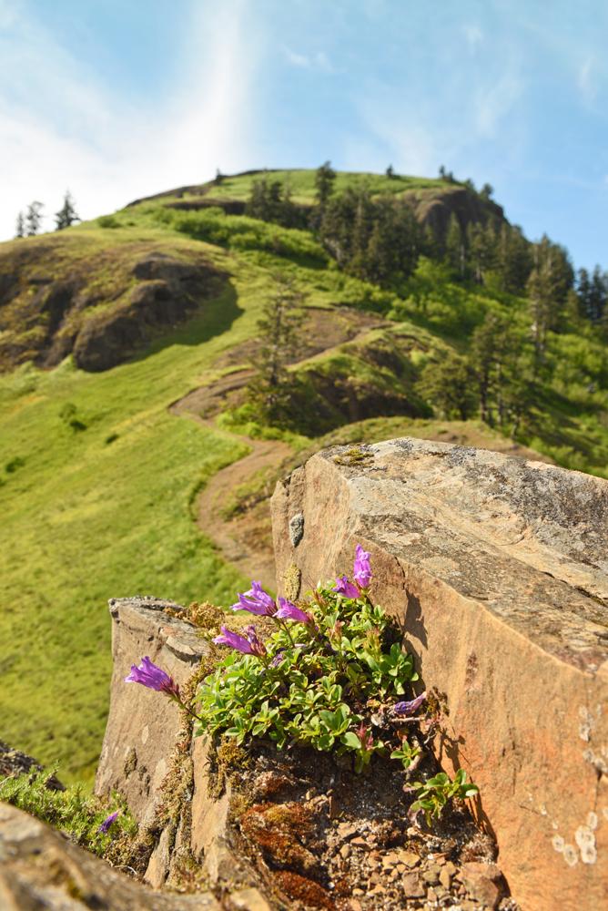 Saddle Mountain Top Trail