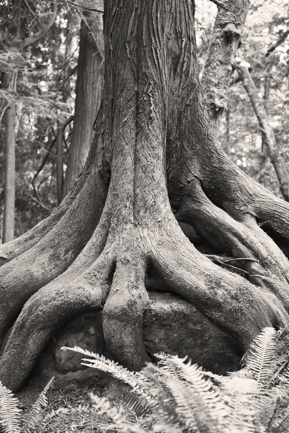 Boulder Tree
