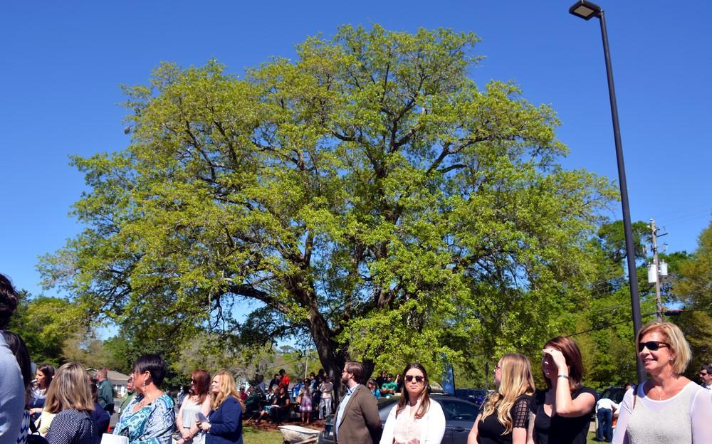 Live Oak Tree-PFCAC 2016-2.jpg