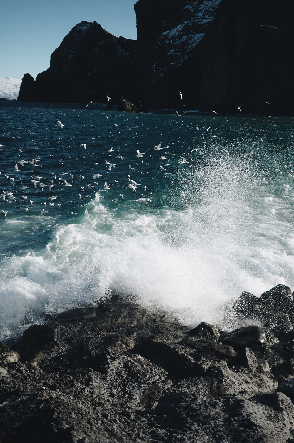 seabirds and sea spray