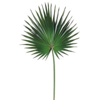 Fan Palm Spray in Green-OPT.JPG