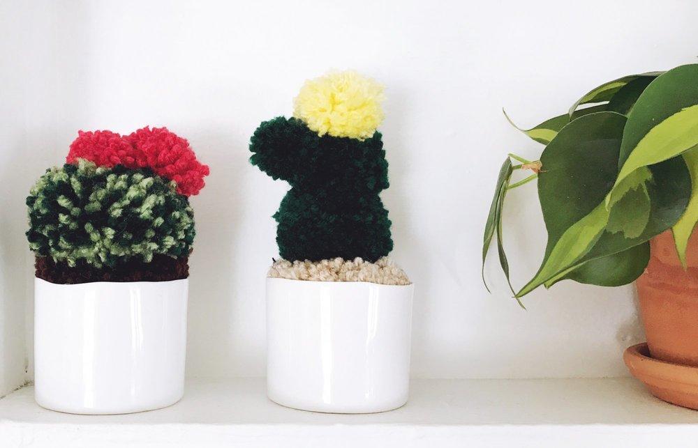 pom_pom_cactus.jpg