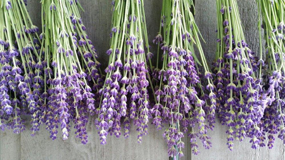 lavender closeup on porch wall.jpg