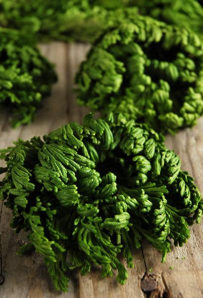 conifer moss.jpg