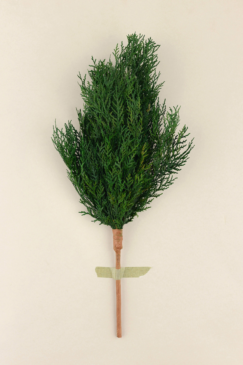 preserved-cedar-branches-16-1.jpg