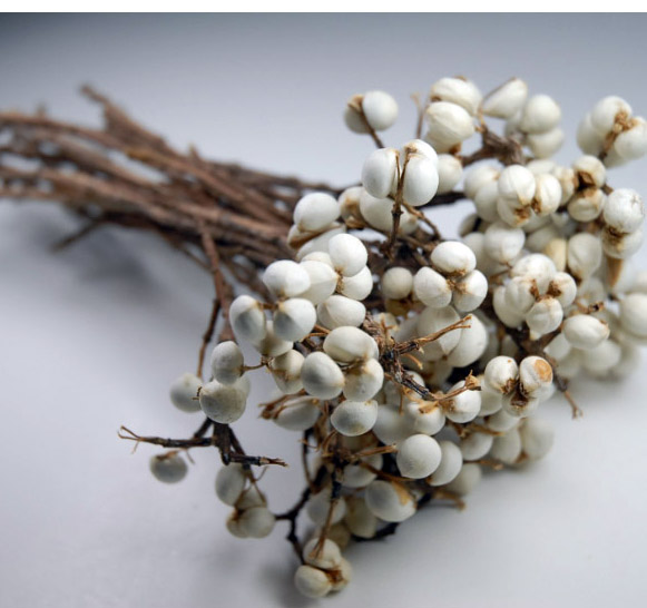 tallow berries.jpg