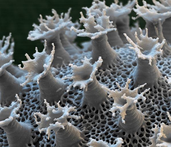 tardigrade egg.jpg