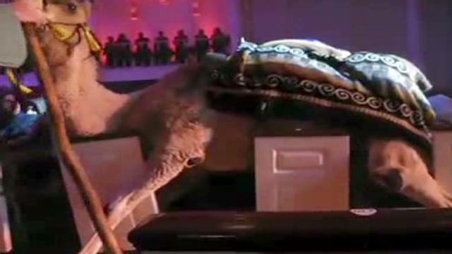 belief.blog.camel.falls.into.crowd.cnn.640x360