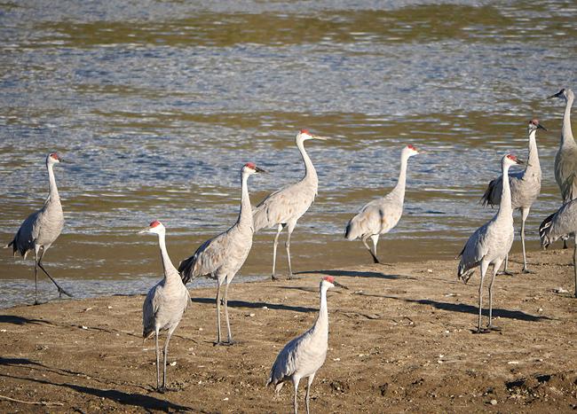 cranes_yo.jpg