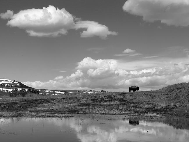 bison_painting.jpg