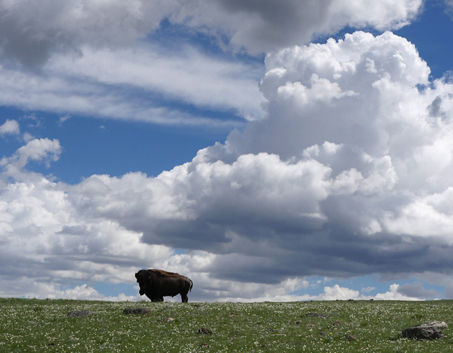 bison_and_clouds.jpg